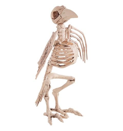 Esqueleto Ave 21X30 cm.