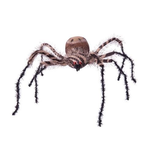 Araña Cebra Grande