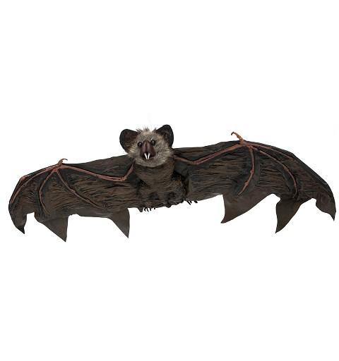 Murciélago Colgante Colmillos